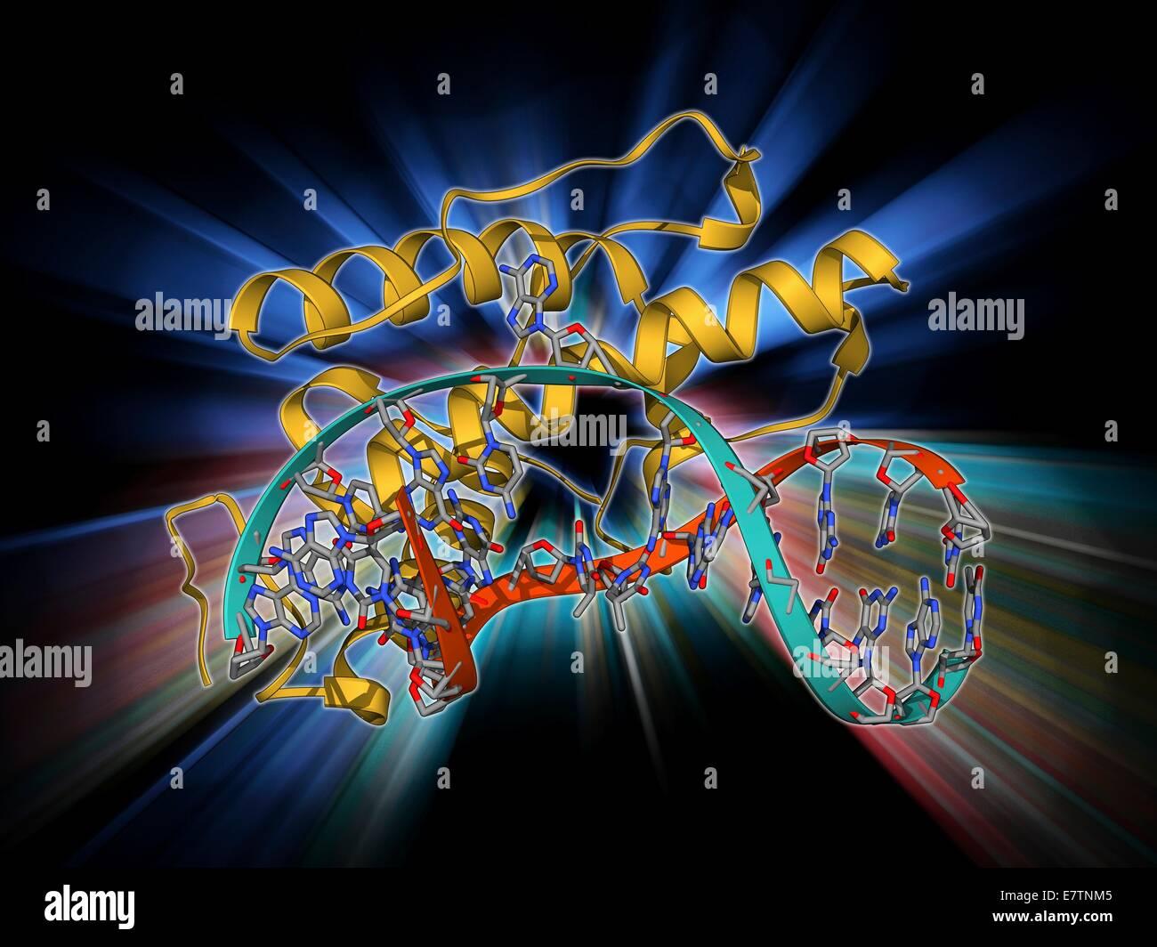 L'enzyme de restriction du bactériophage. Le modèle moléculaire de l'enzyme de restriction Photo Stock