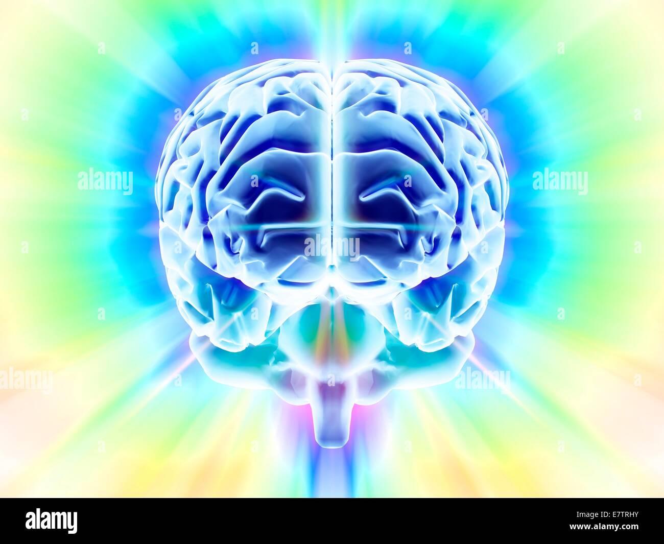 Cerveau humain, l'oeuvre de l'ordinateur. Photo Stock
