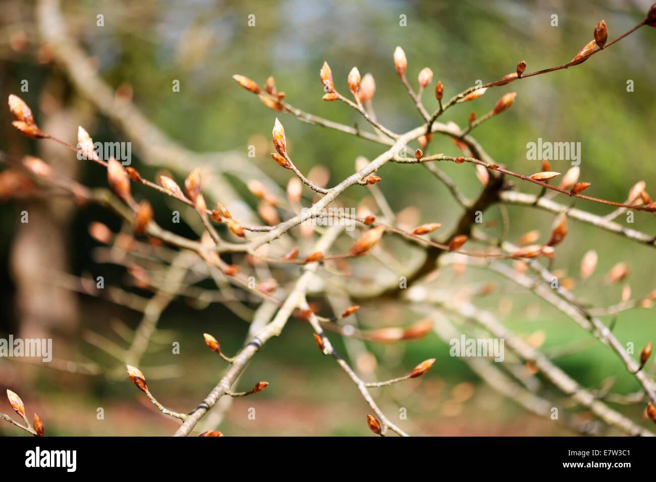 Les bourgeons de la vie nouvelle - la puissance de gaia ©Jane Ann Butler Photography JABP1259 Photo Stock