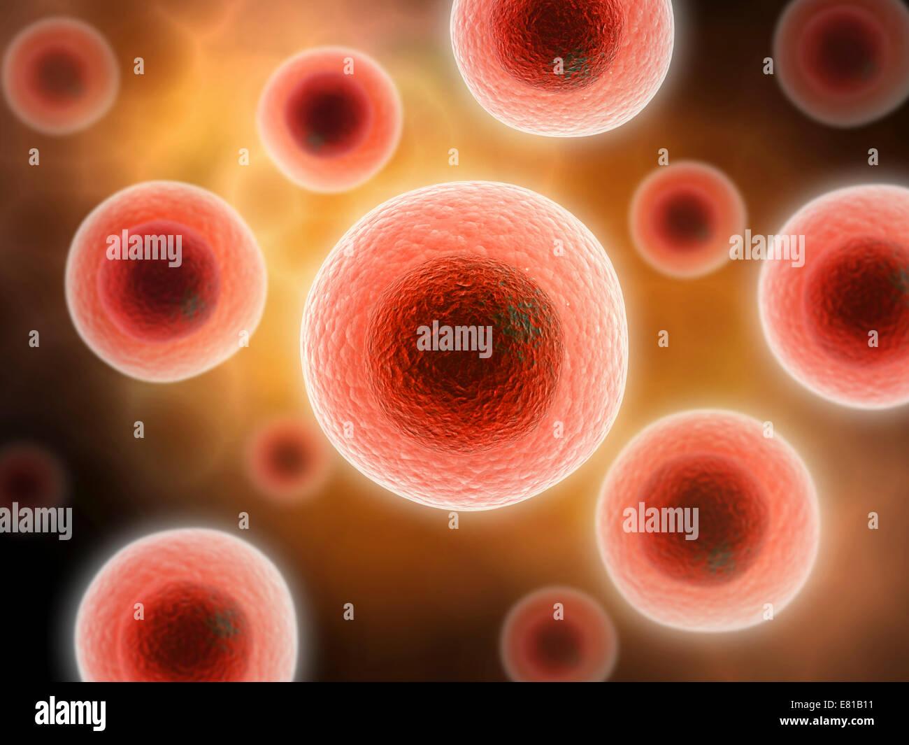 Vue microscopique de la cellule. Photo Stock