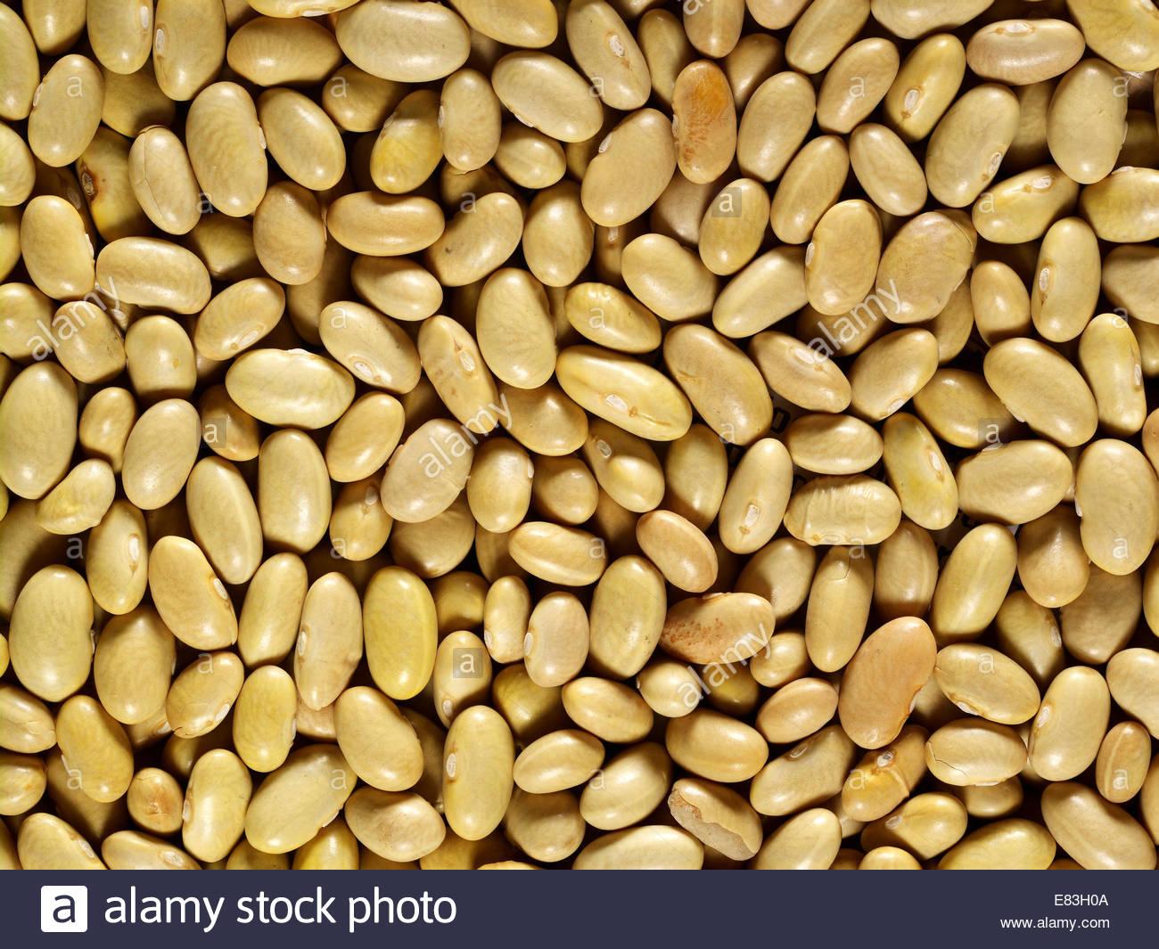 Un lit de base de plante, végétarien et Bio Haricots Blancs tourné comme textures comme arrière Photo Stock