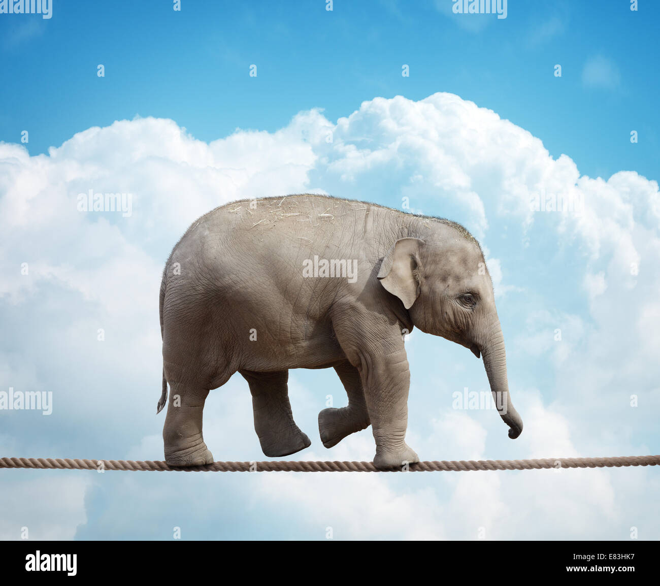 Elephant calf on tightrope Photo Stock