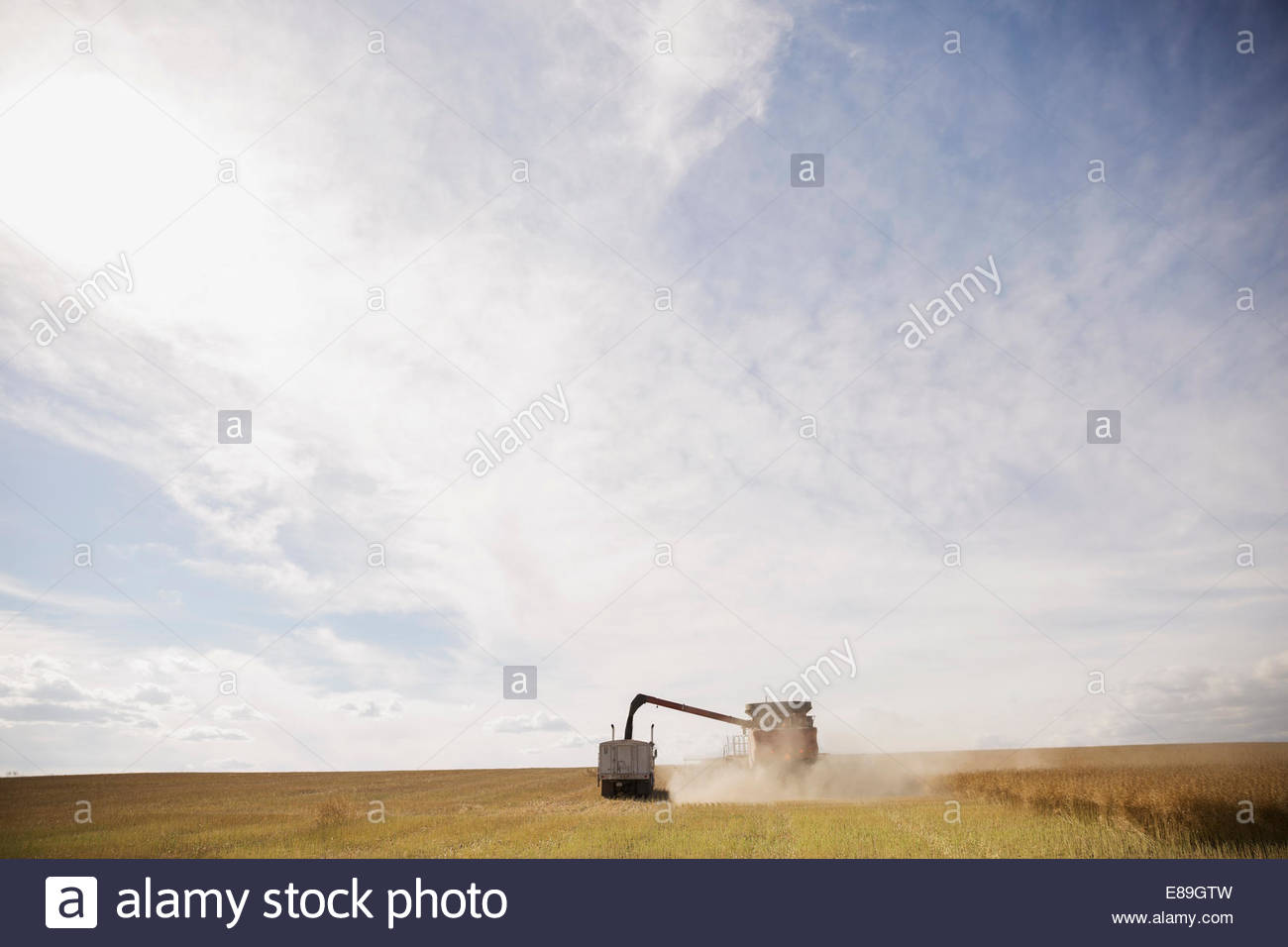 Moissonneuse batteuse travaillant dans sunny crop field Photo Stock