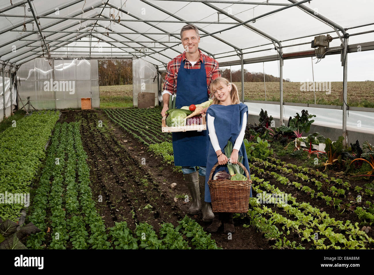 Père et fille la cueillette des légumes en serre Photo Stock