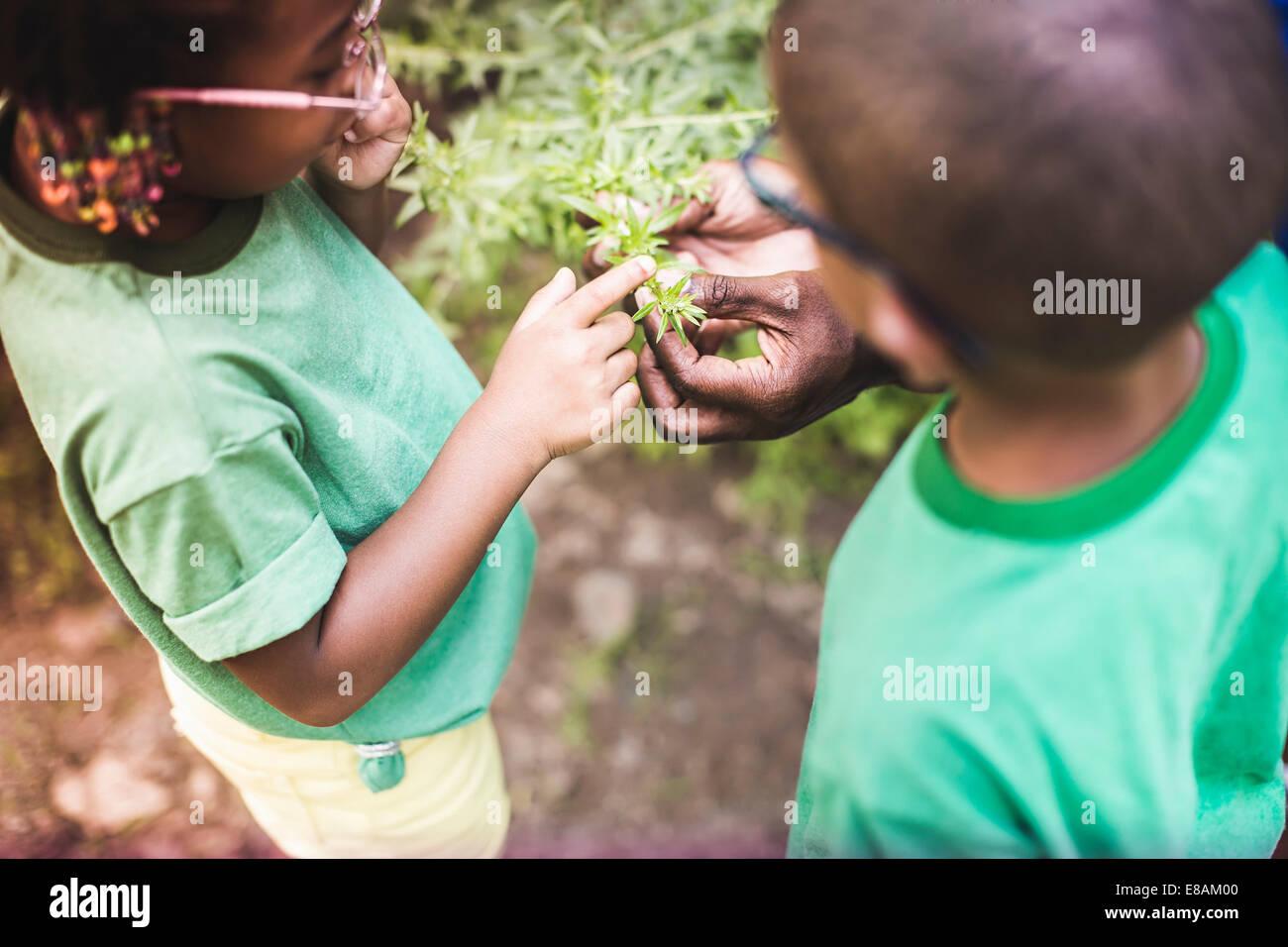 Pères hands holding plantes pour son fils et sa fille à eco camp forestier Banque D'Images