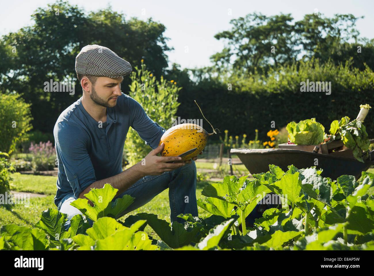 Contrôle de légumes jardinier Photo Stock