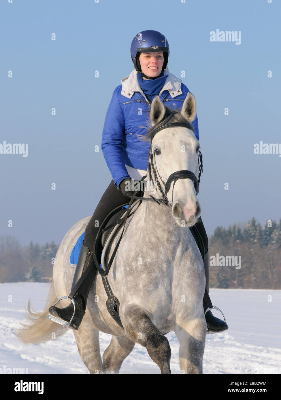 Sortir en hiver sur le dos d'un cheval de selle français (English) Photo Stock