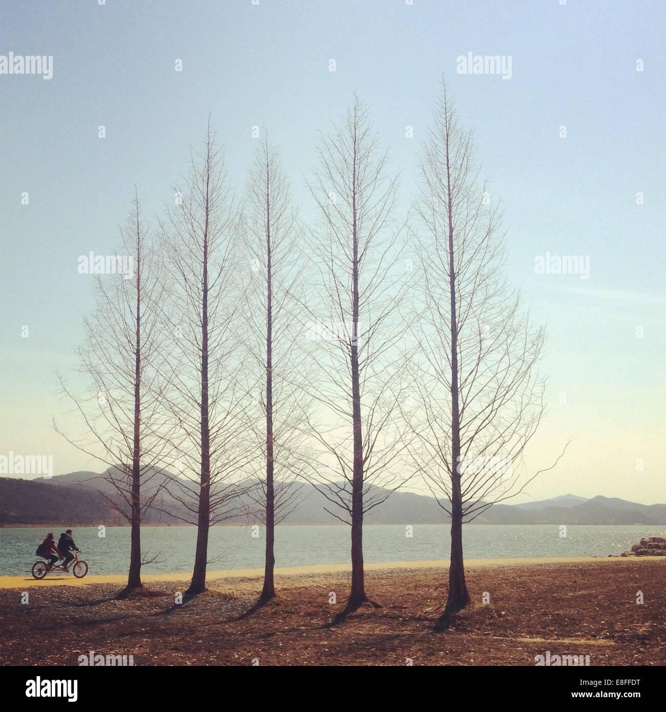 Couple d'arbres à vélo Photo Stock