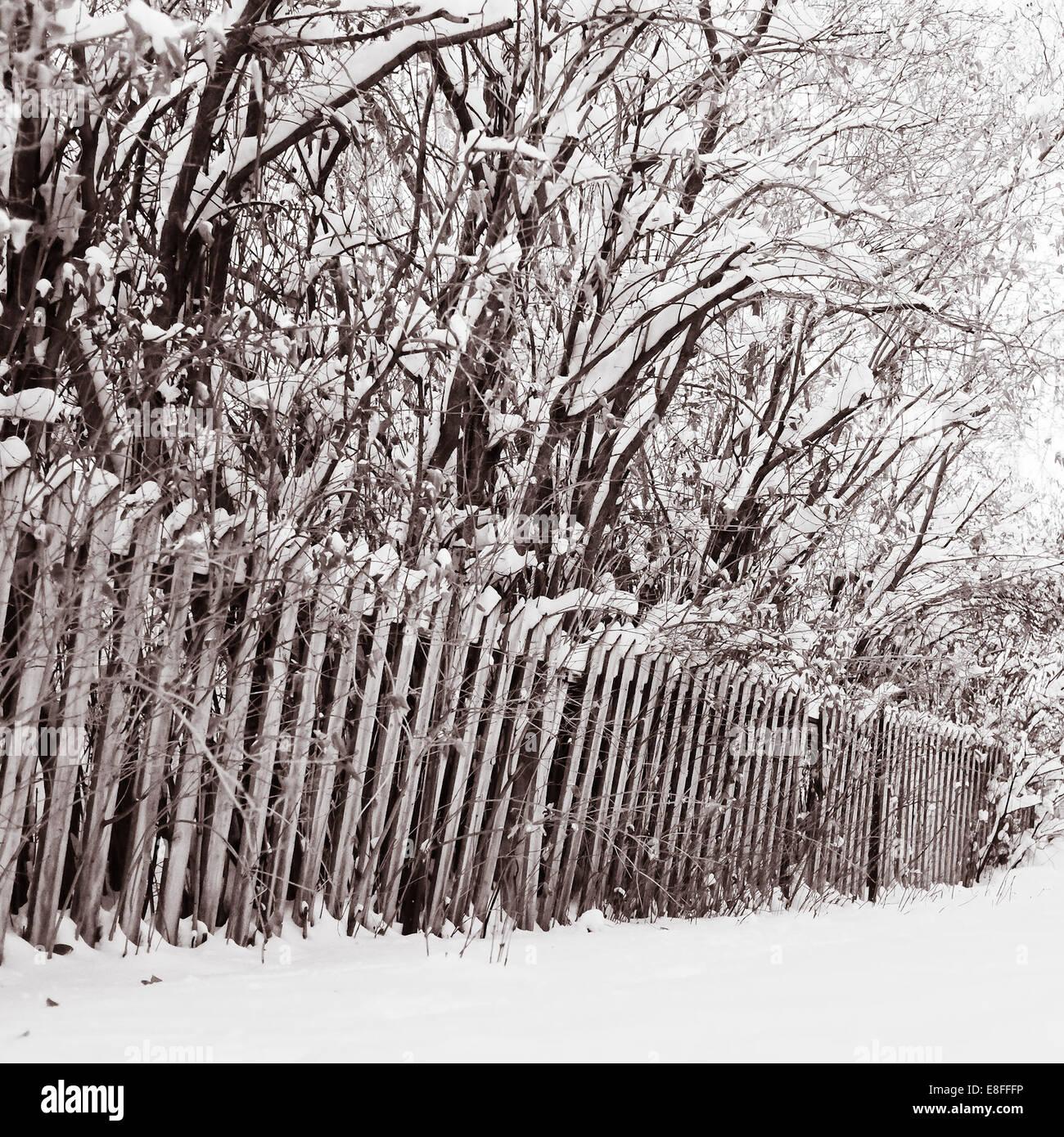 Clôture en bois et d'arbres couverts de neige Photo Stock