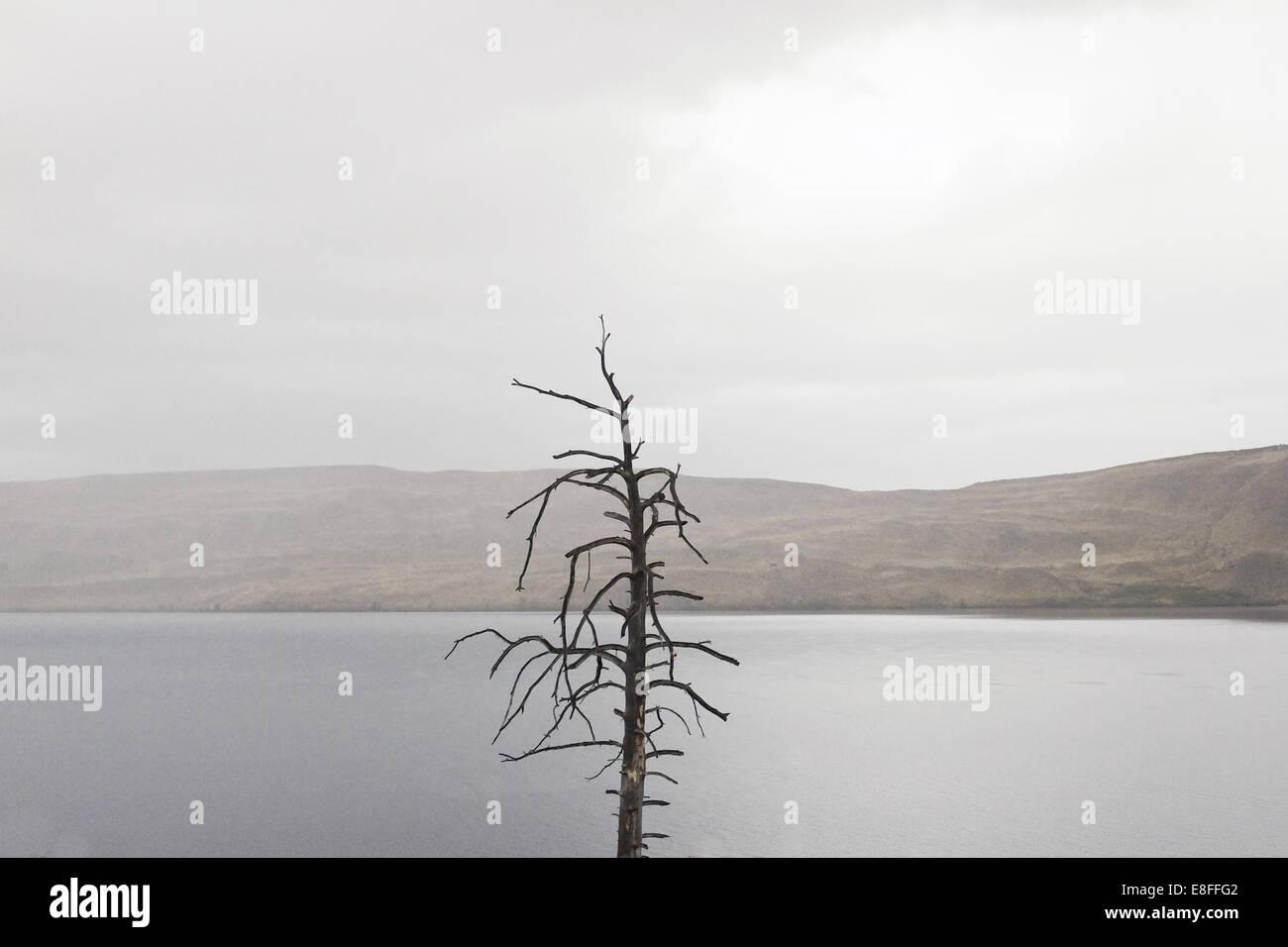 Arbre nu by lake Photo Stock