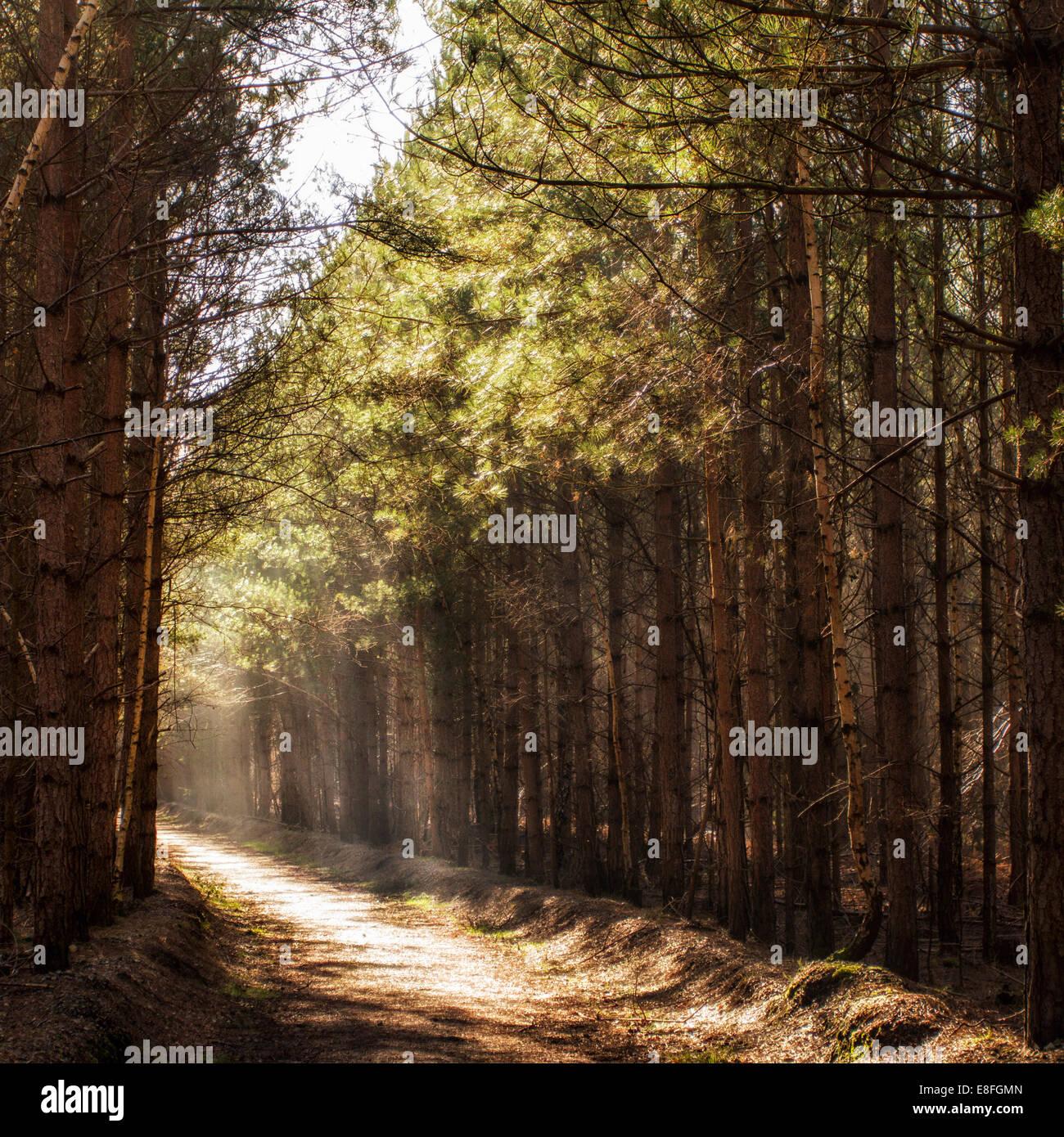 La lumière du matin sur le chemin des bois Photo Stock
