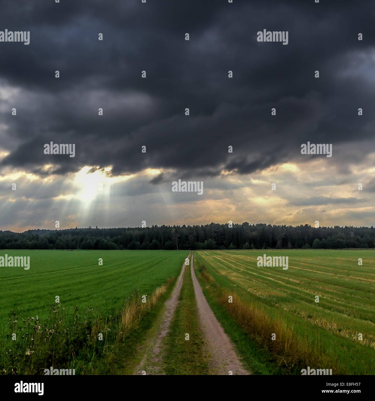 Paysage avec stormy clouds over field Photo Stock