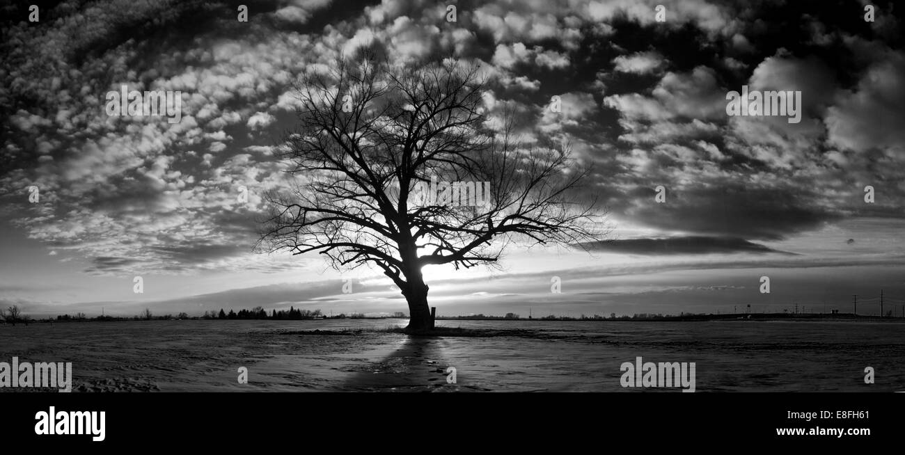 USA, New York, le Comté de Bonneville, Idaho Falls, seul et triste tree Photo Stock