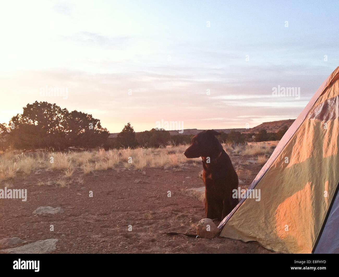Chien assis à l'extérieur tente Photo Stock