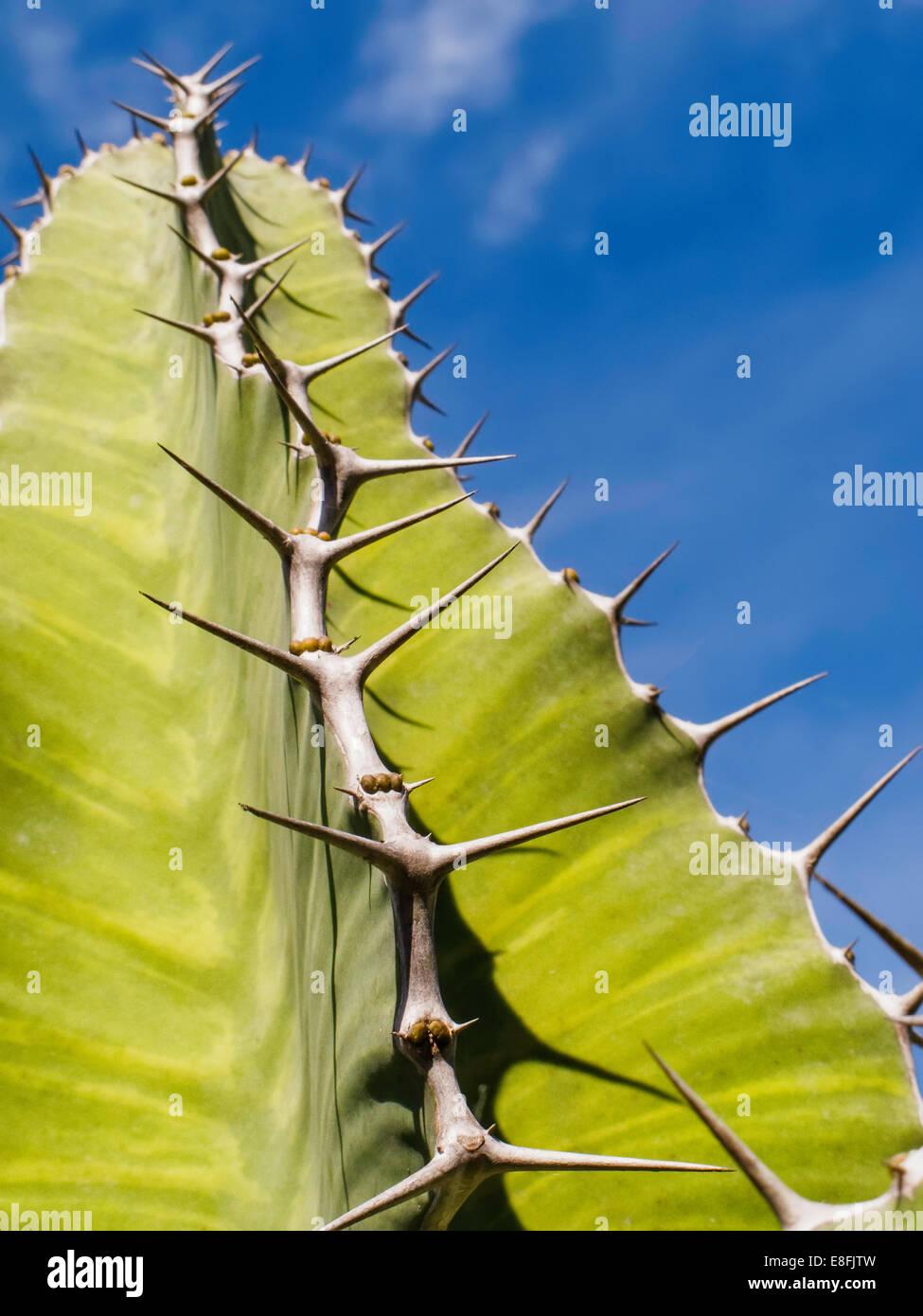 USA, Florida, Miami, Comté de Miami-Dade, vert plante succulente épineuse Photo Stock