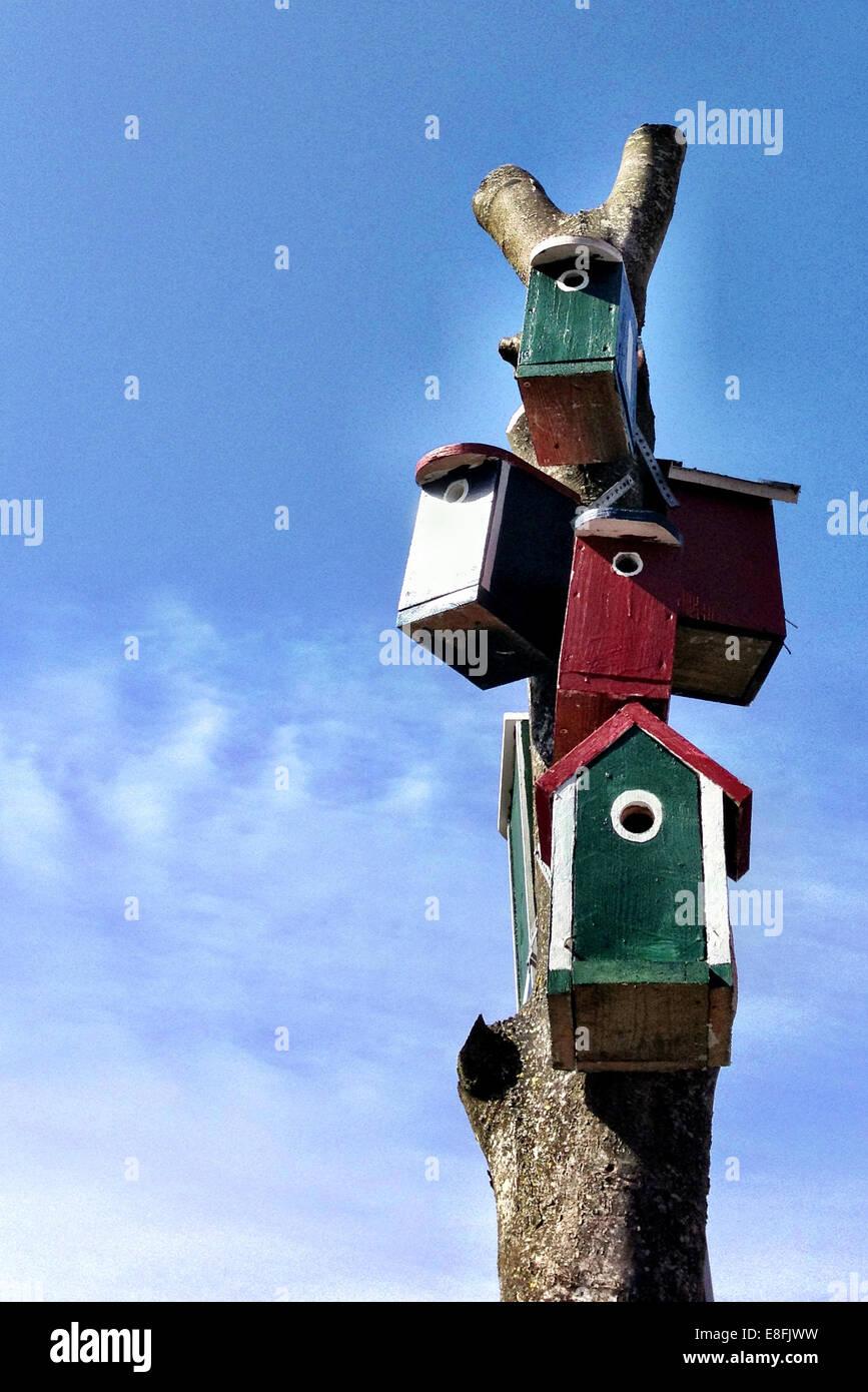 Boîtes d'oiseaux sur l'arbre, Danemark Photo Stock