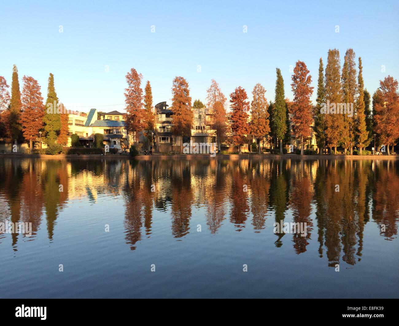 Arbres et maisons au bord de la rivière Photo Stock