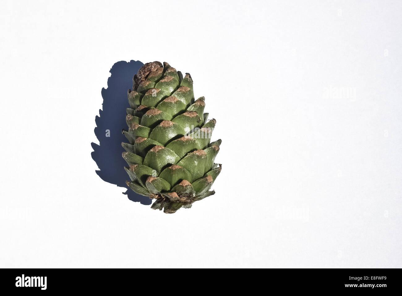 Cône de pin contre fond blanc Photo Stock