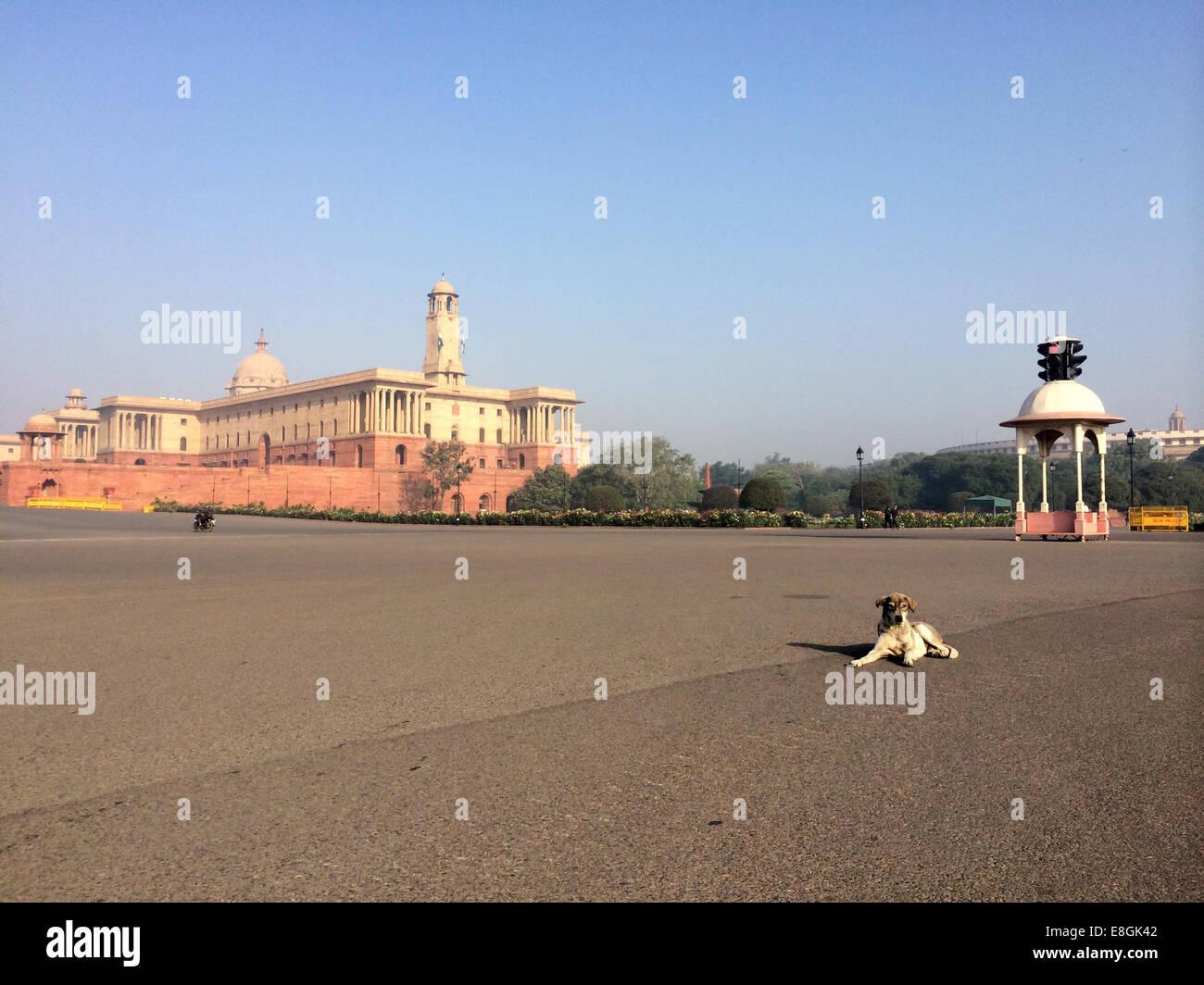 L'Inde, New Delhi, Vijay Chowk, un chien est assis au milieu de la route Photo Stock