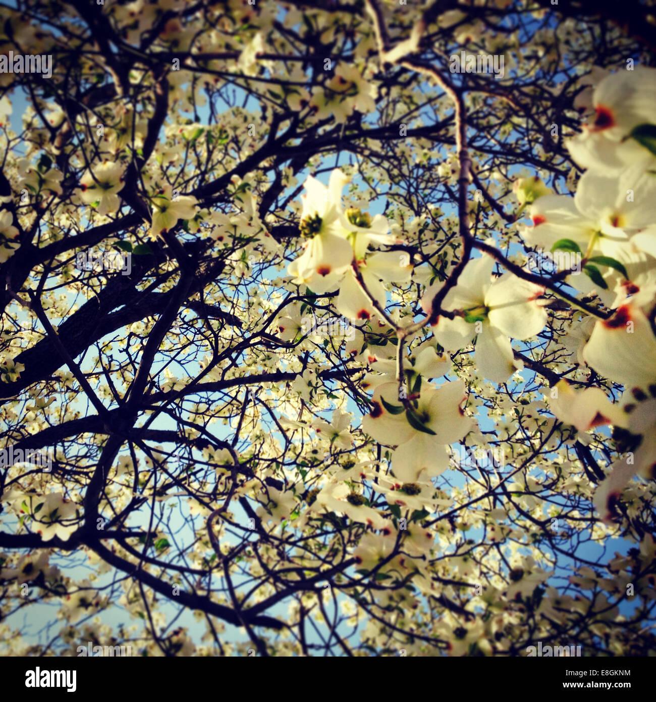 Columbus, Lowndes County, Mississippi, États-Unis d'Amérique Douche Fleurs Photo Stock