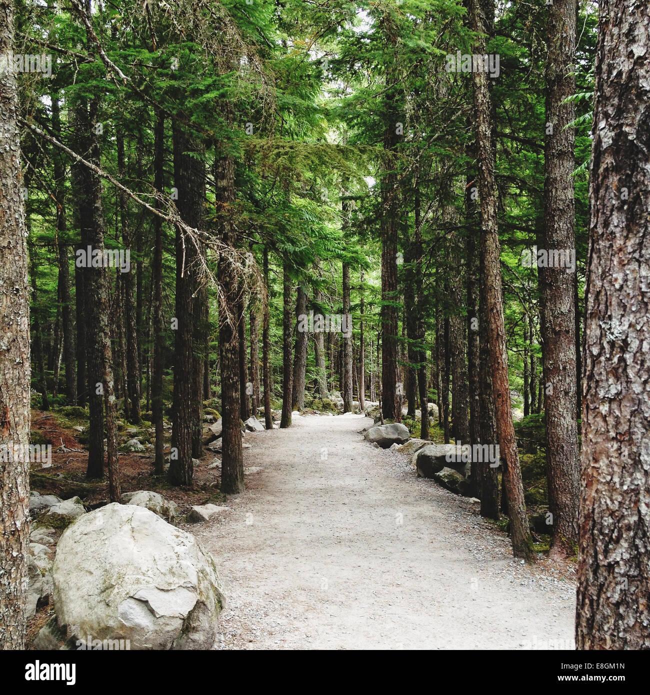 Chemin à travers la forêt, Canada Photo Stock