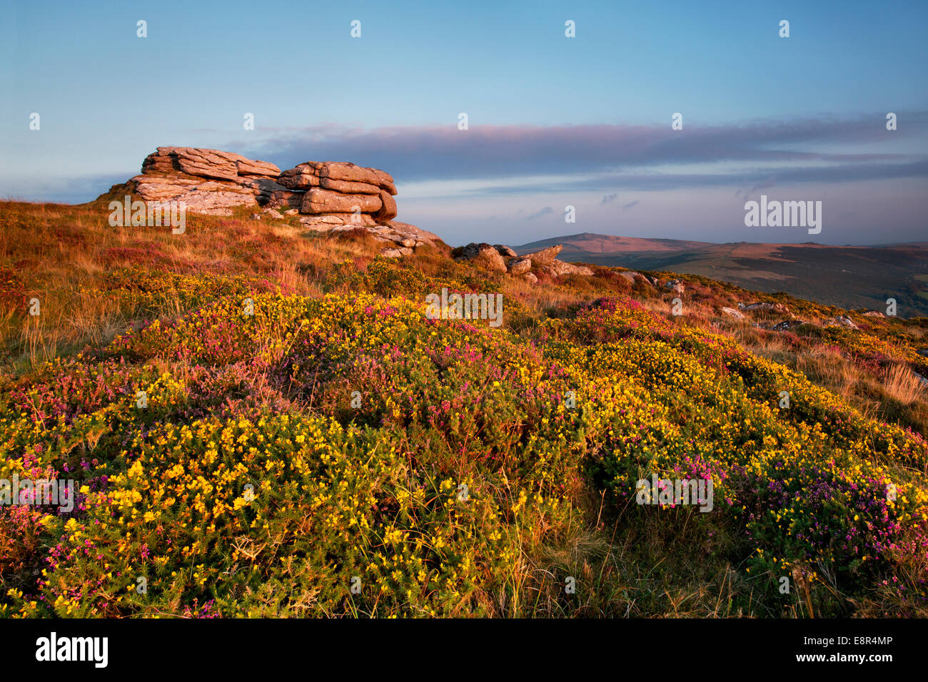 Vue de l'Chinkwell Tor montrant la bruyère et l'ajonc dans le Dartmoor National Park, Devon Photo Stock