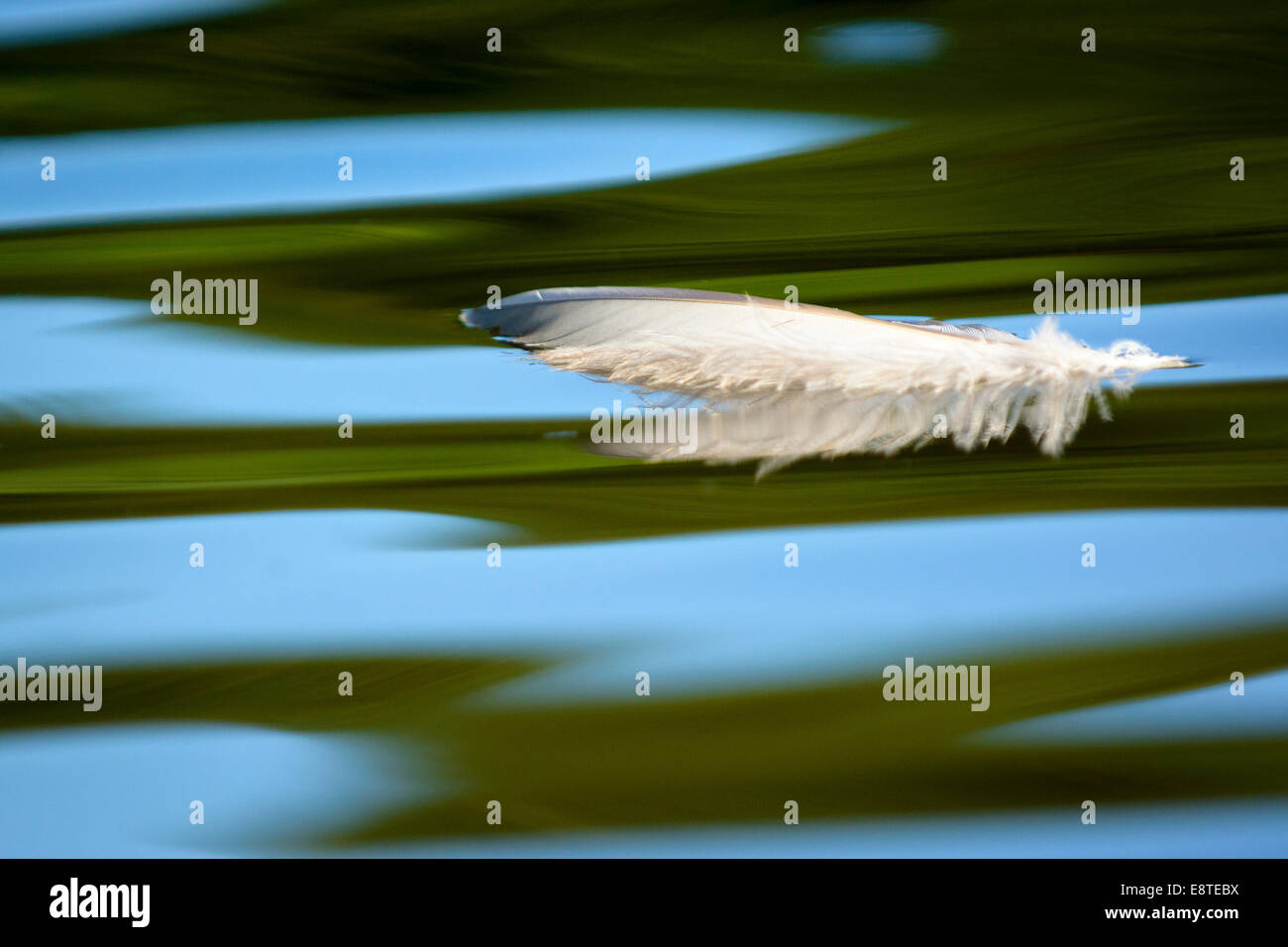 Plume d'oiseau sur l'eau. Photo Stock