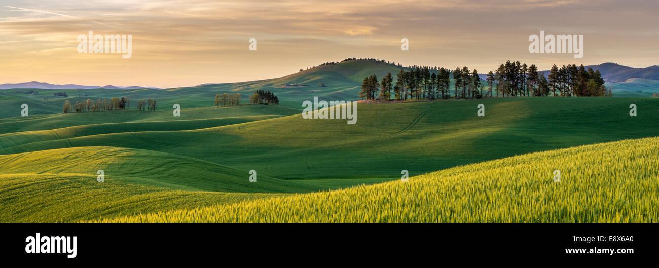 Whitman Comté, WA: Coucher de soleil sur les collines de la région de Palouse Photo Stock