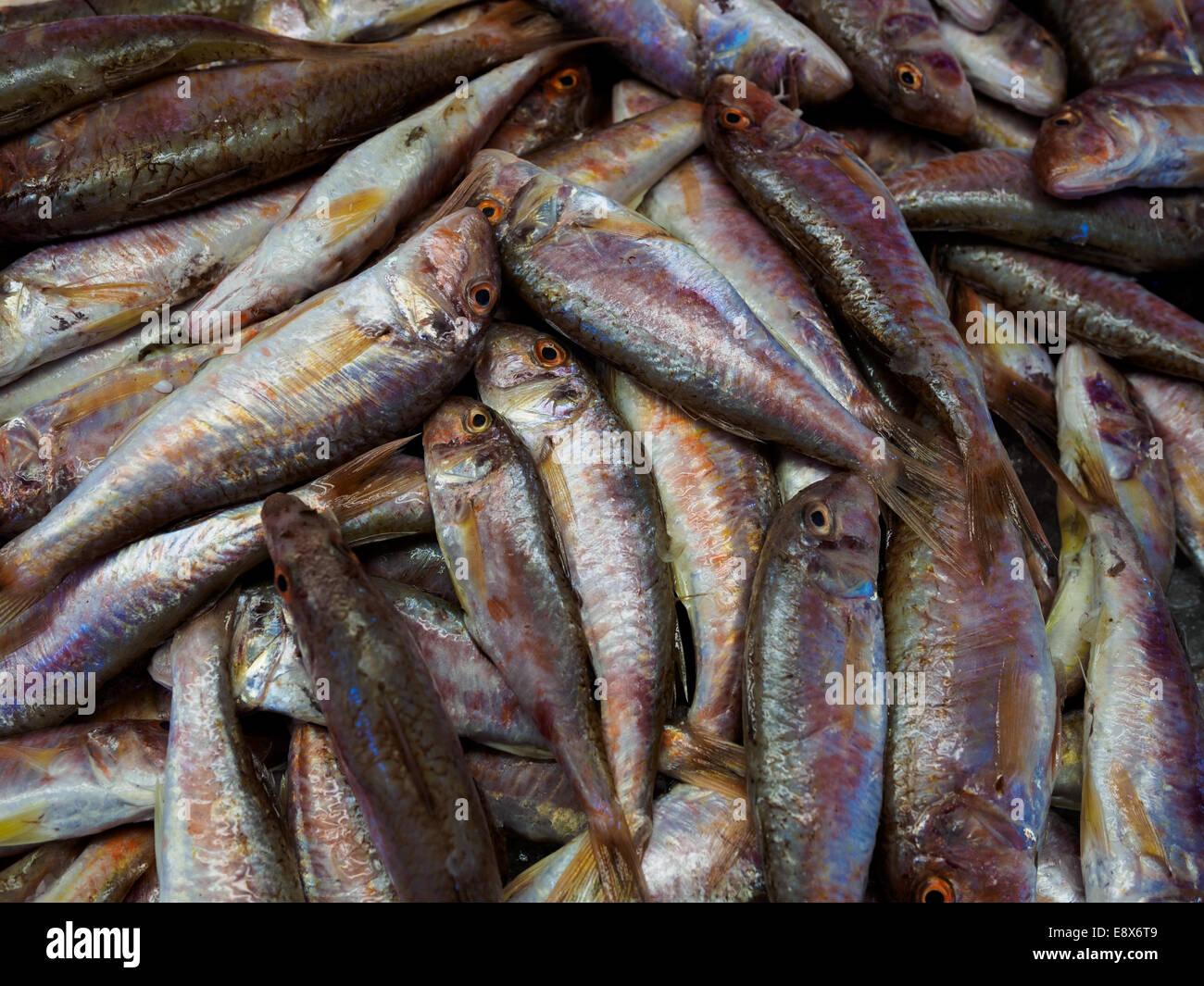 Close-up de poissons frais en vente au marché du Rialto à Venise, Italie. Banque D'Images