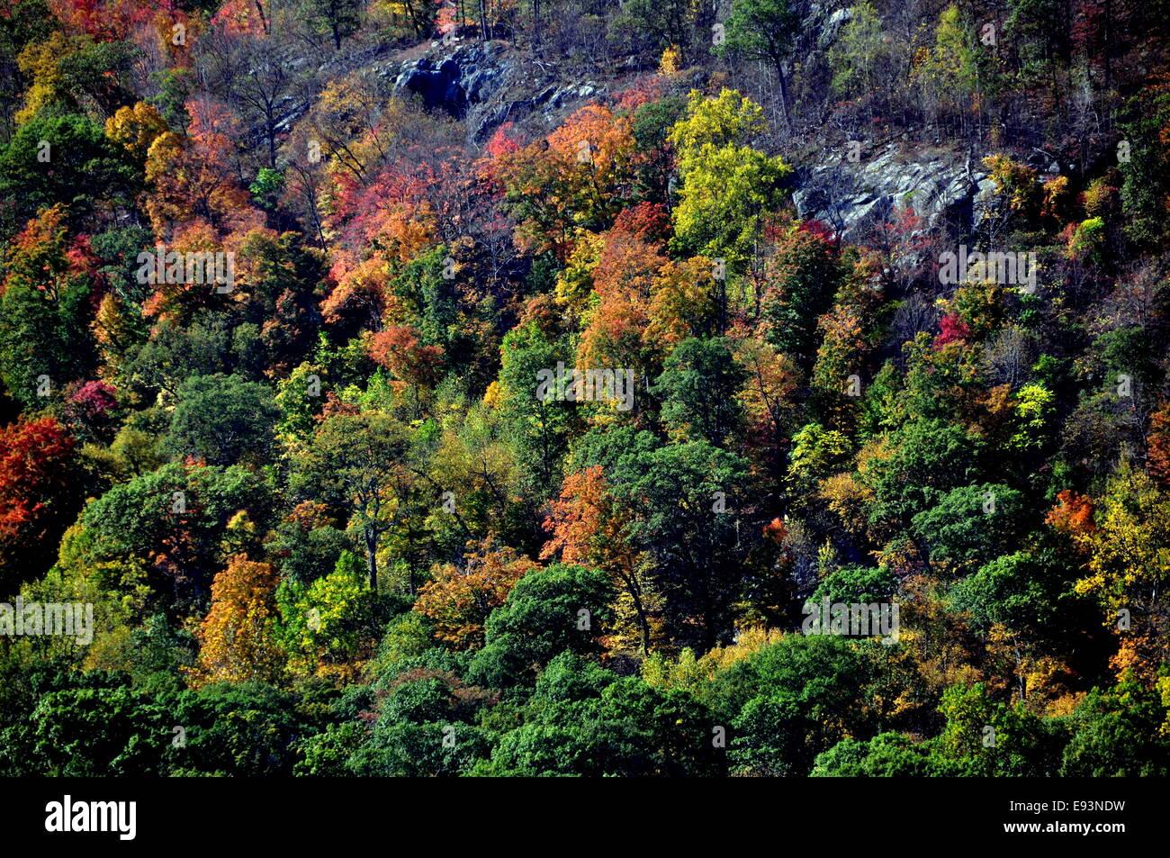 Printemps froid, NY: Masses de feuillage d'automne éblouissant les banques en ligne de la rivière Photo Stock