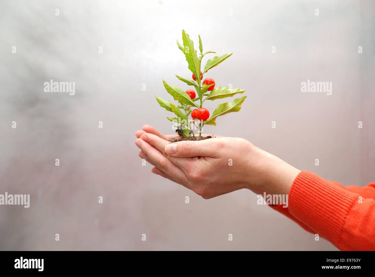 notion de croissance Banque D'Images