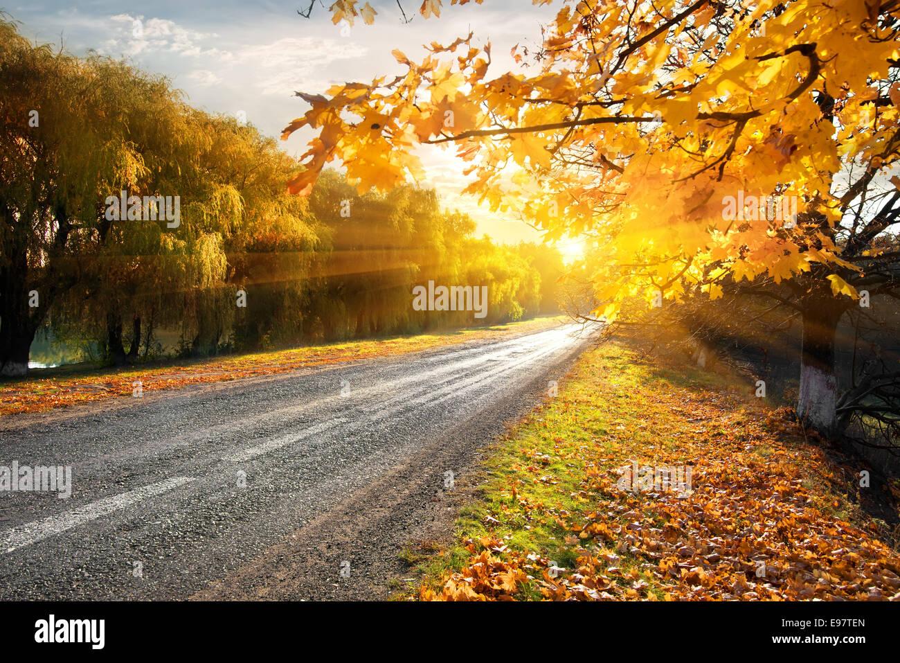 Autoroute à travers la forêt d'automne dans les rayons Photo Stock