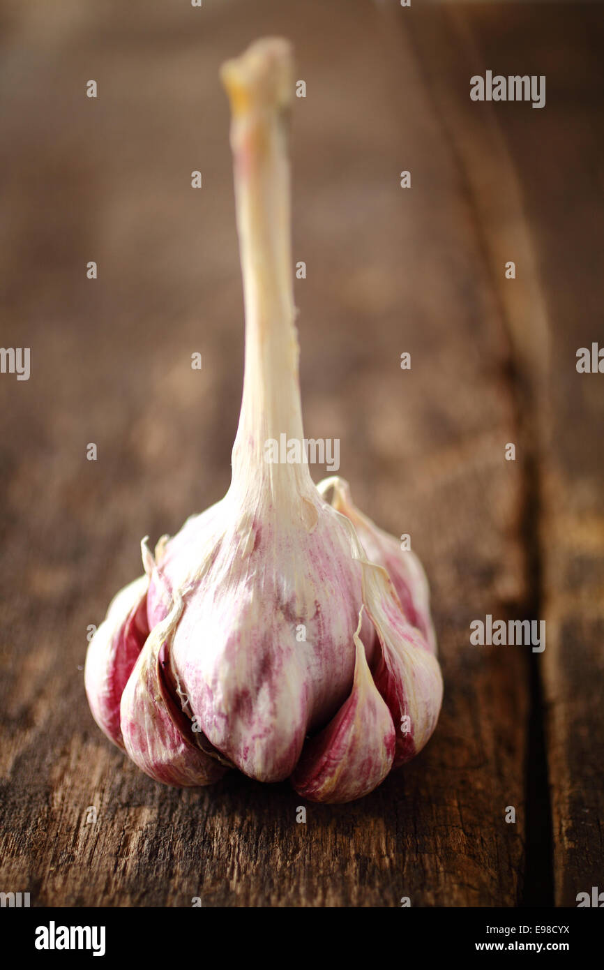 Gousses d'ail frais aromatique sur une ampoule intacte encore avec une vitre pour l'accrochant pendant le Photo Stock