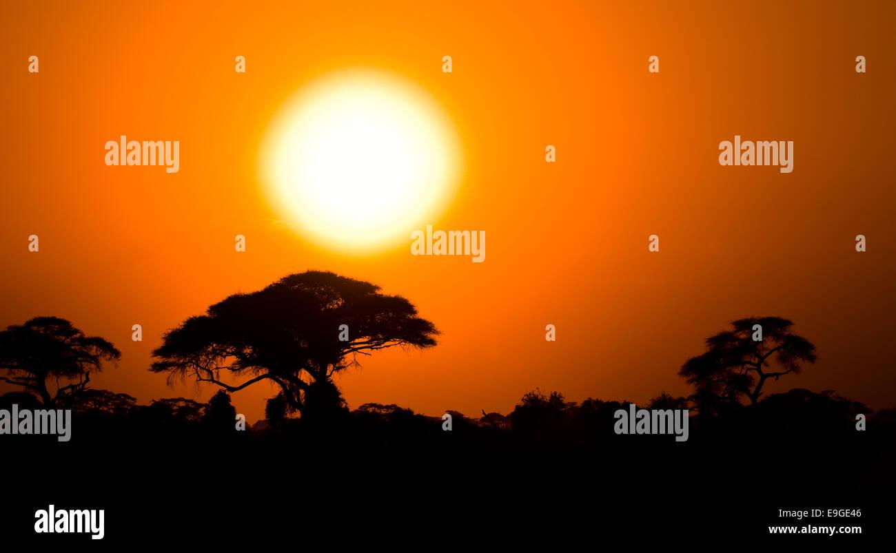 Coucher de soleil africain à savannah Photo Stock