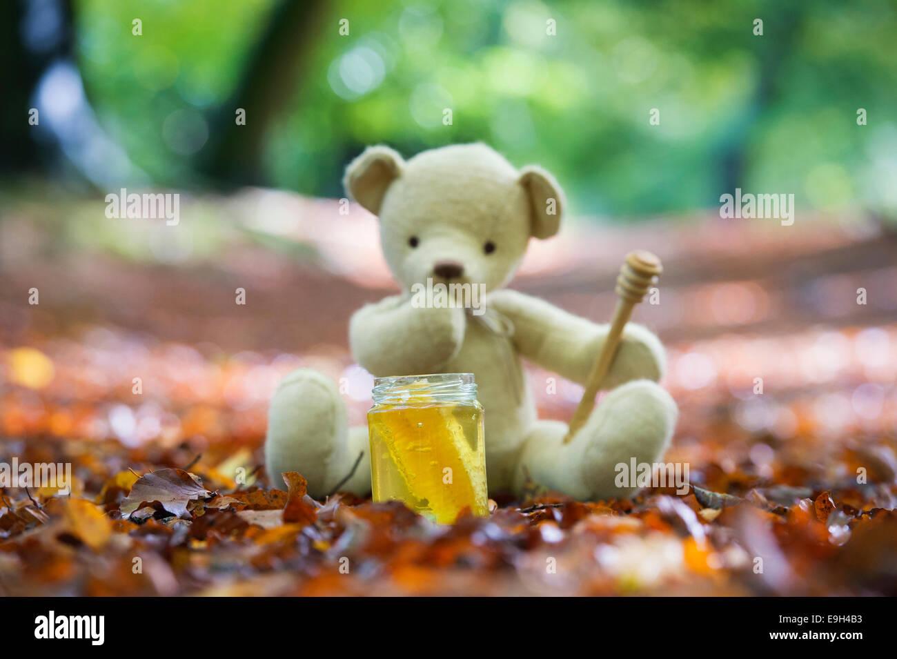 Ours en peluche dans un bois en automne qui envisagent de manger un pot de miel Photo Stock