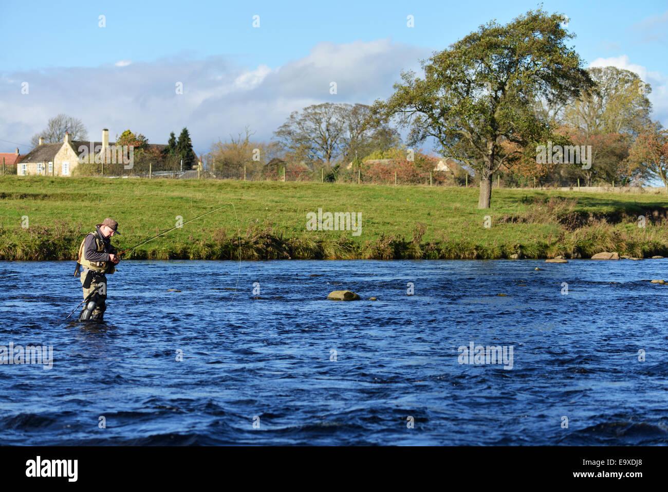 L'homme pêche de mouche sur le fleuve Tees dans le comté de Durham Photo Stock