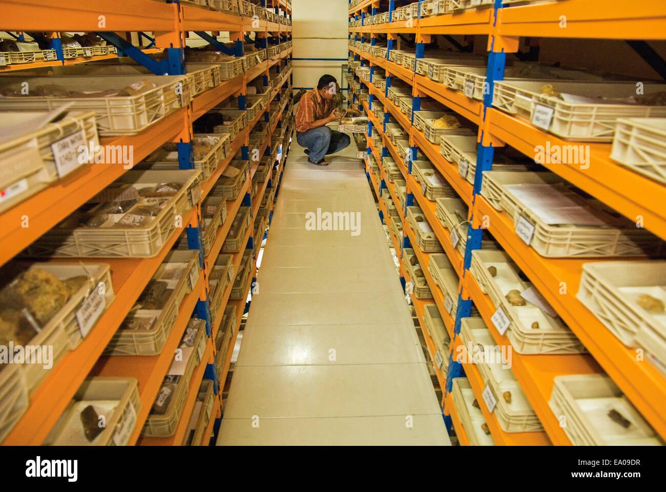 Chercheur scientifique à la paléontologie des vertébrés armoire de stockage collecte plein de Photo Stock
