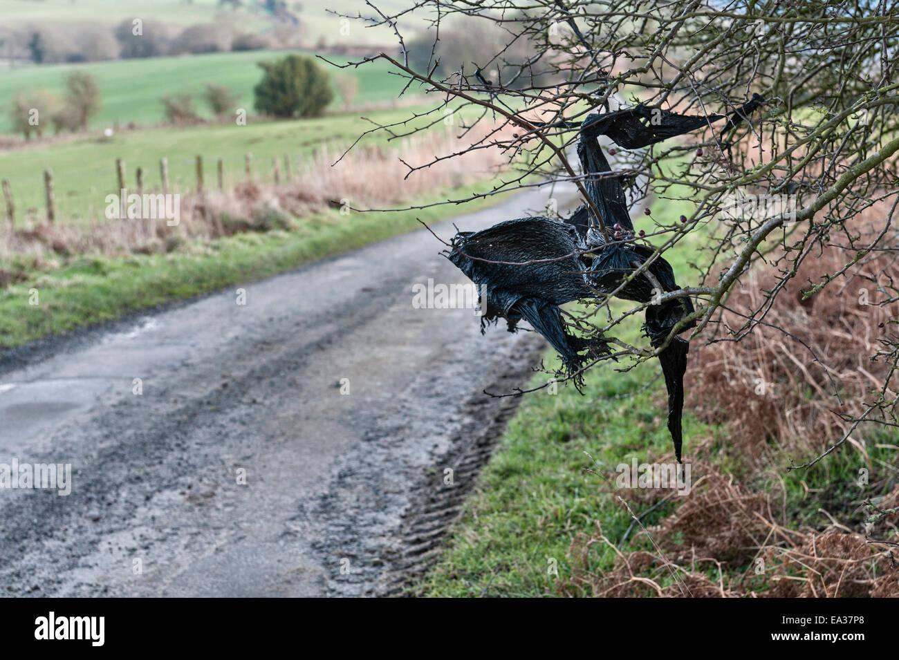 Des bâches en plastique noir - danseur pris dans une haie, Pays de Galles, Royaume-Uni. Photo Stock