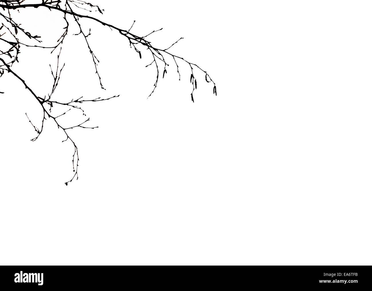La silhouette des branches d'arbre. Photo Stock