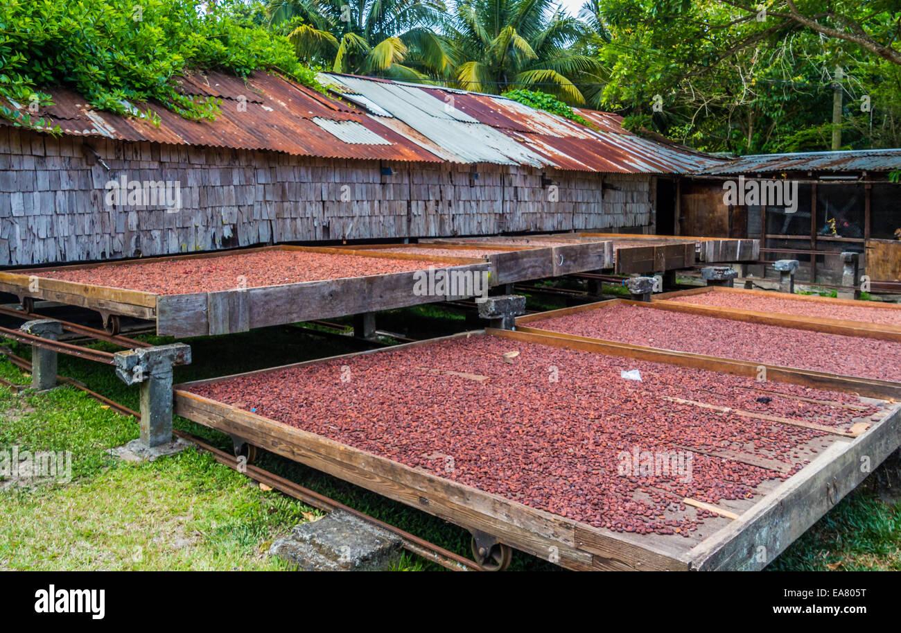 Fond Doux plantation de cacao Photo Stock