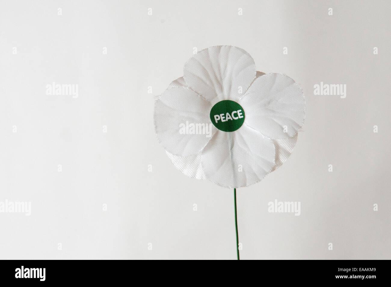 Coquelicot la paix blanche sur un fond blanc. Photo Stock