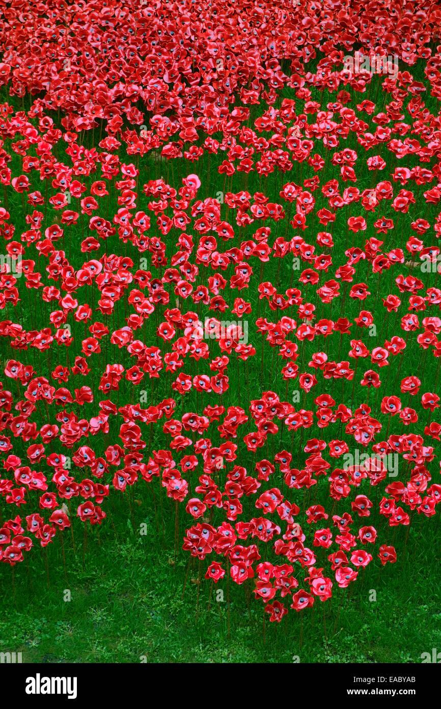 Les coquelicots en céramique, le sang a balayé les terres et les mers de rouge, Tour de Londres, Londres, Photo Stock