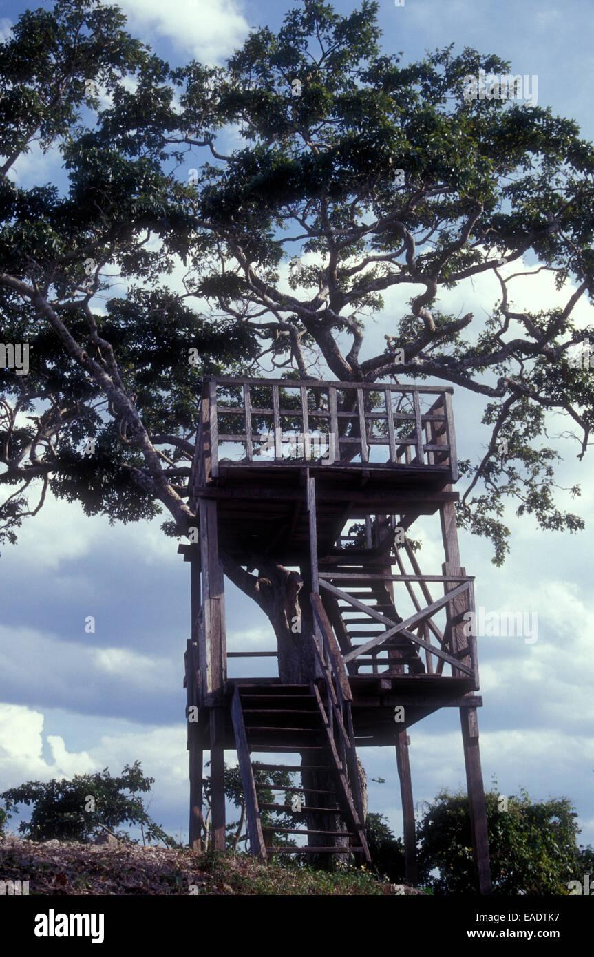 Tour D Observation En Bois Dans Un Arbre A L Tayasal Site