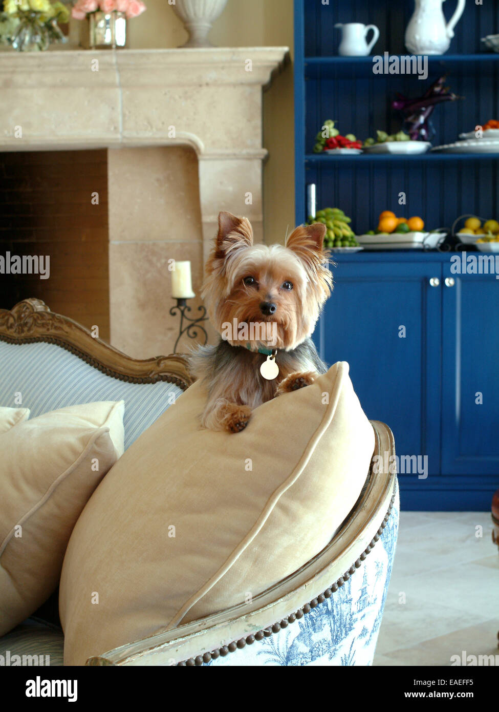 Petit Chien sur la table Photo Stock