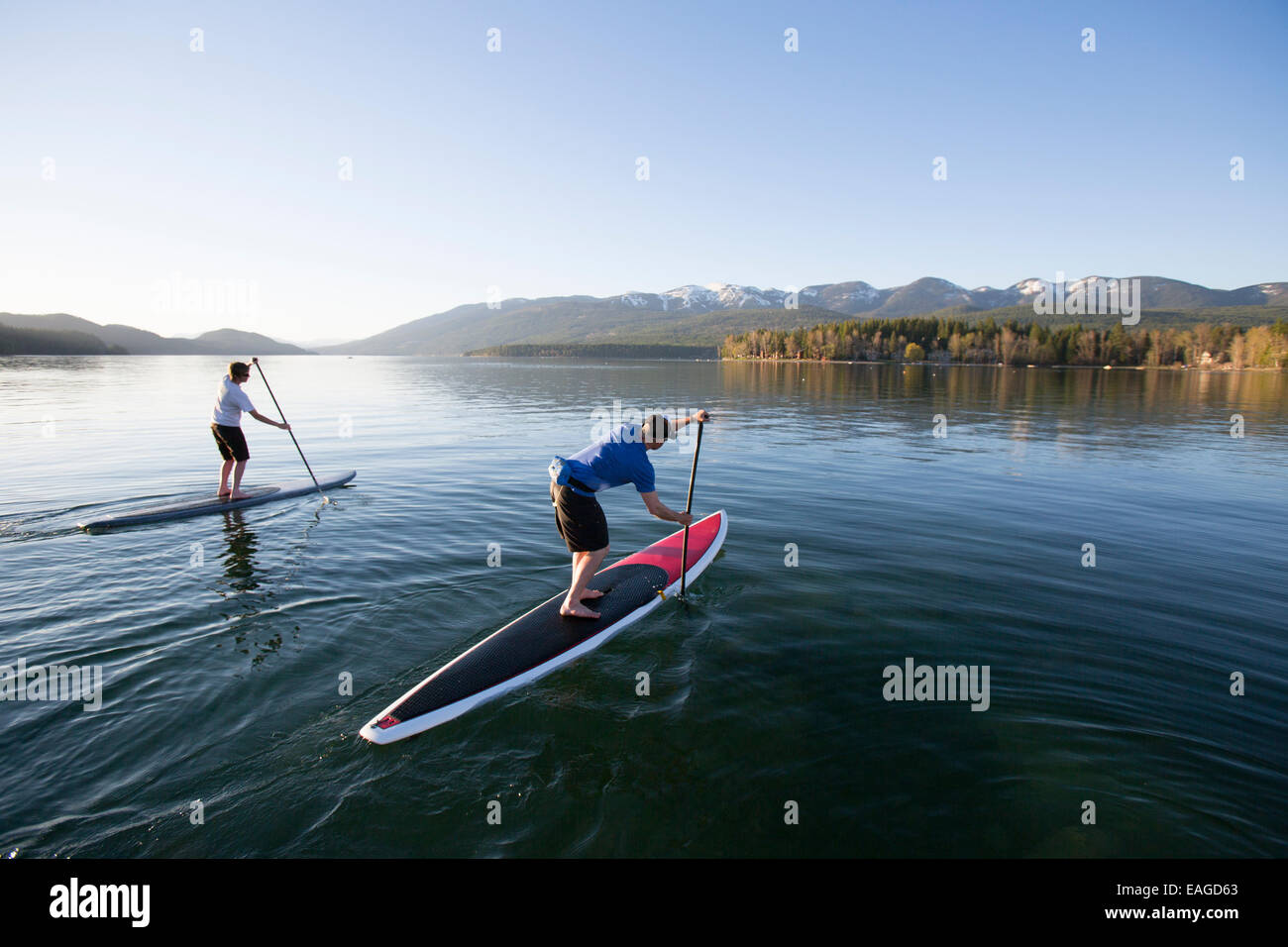 Mettre en place un homme et femme stand up paddle board (SUP) au coucher du soleil sur le lac Whitefish à Whitefish, Photo Stock