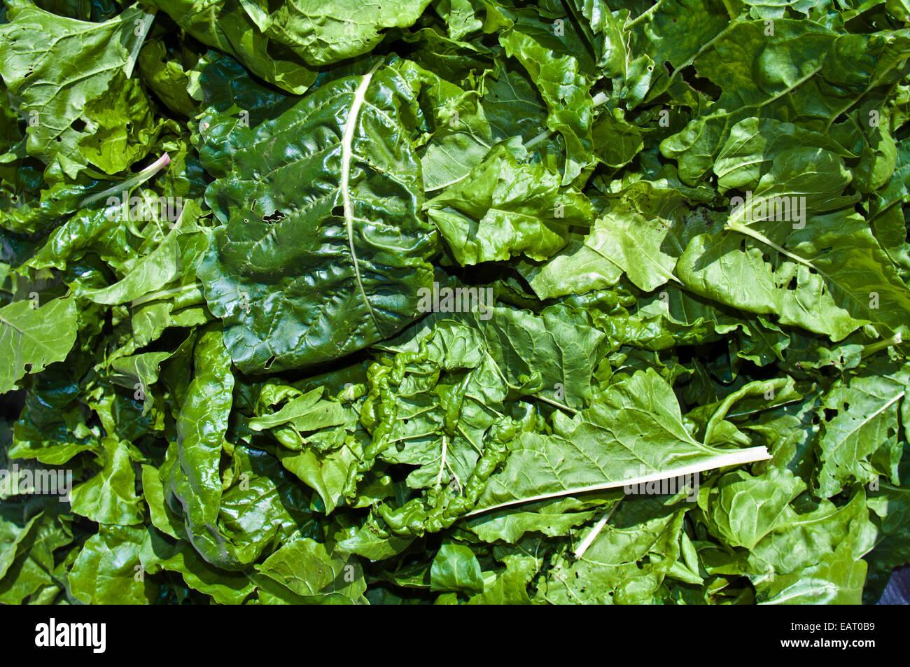 Un monticule de vert biologique fraîchement récolté les feuilles d'épinards. Photo Stock