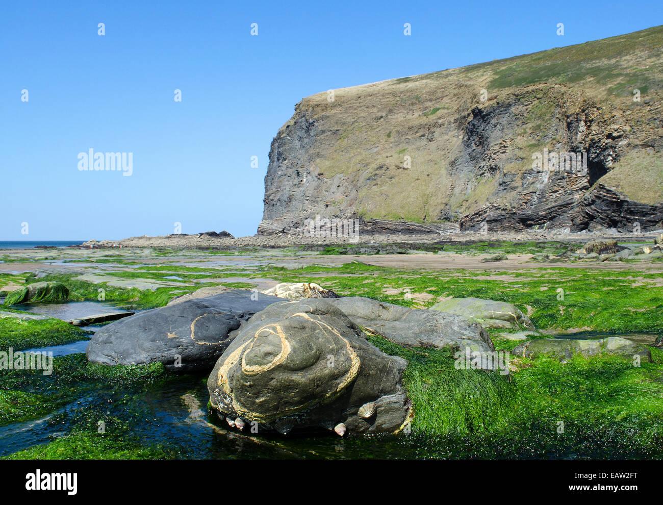 Les filons de quartz dans les roches sur la plage de Crackington Haven, Cornwall, UK Photo Stock