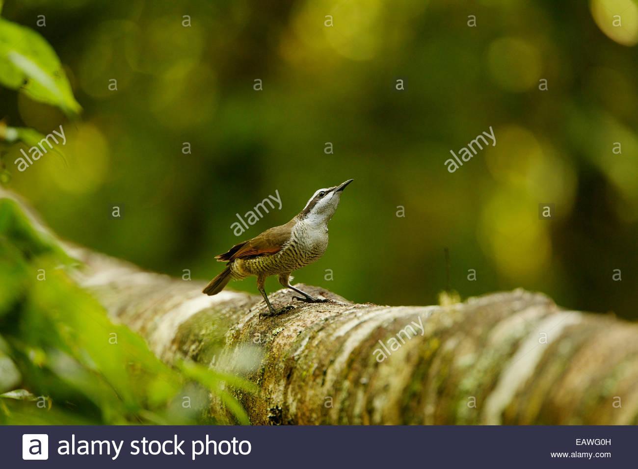 Un jeune homme superbe oiseau de paradis visite le afficher le journal d'un adulte. Photo Stock
