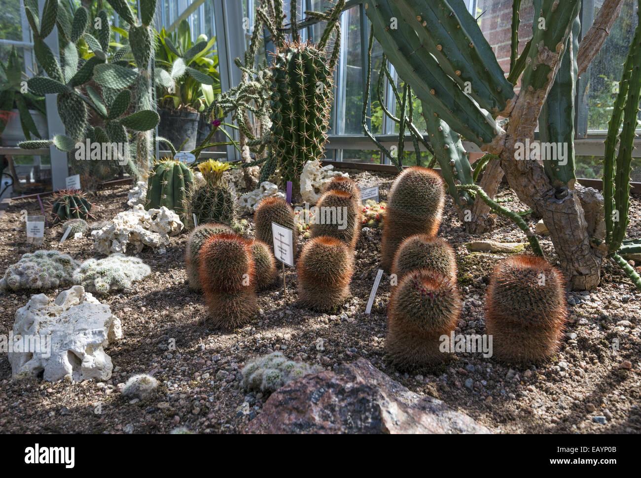 L Affichage A L Interieur Du Cactus Jardin D Hiver D Helsinki