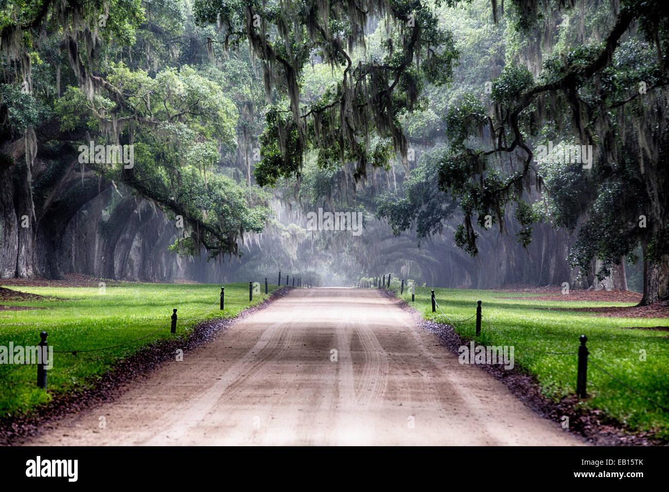 Chêne Arbre ramifiée sur une route de campagne, l'Avenue des chênes, Boone Hall Plantation, Mt Photo Stock